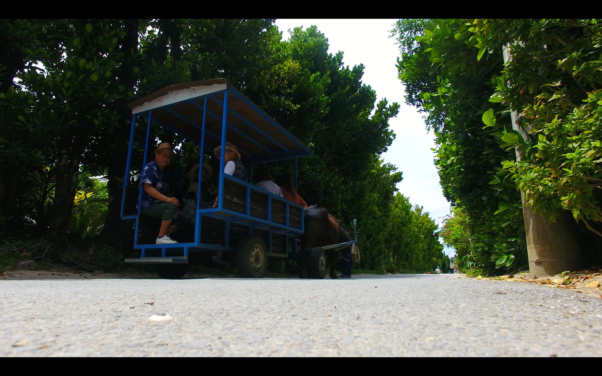 沖縄北部のフクギ並木の撮影その2